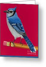 Bluejay Perched On Pencil Greeting Card