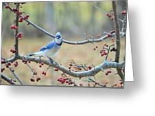 Blue Jay Poses In Crab Apple Tree Greeting Card