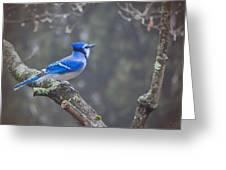 Blue Jay Song Greeting Card