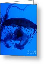 Blue Jelly Fish Greeting Card
