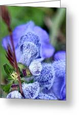Blue Lupine Flower - 2 Of 5 Shots Greeting Card