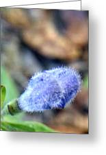 Blue Lupine Flower - 3 Of 5 Shots Greeting Card