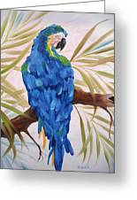 Blue Macaw Greeting Card