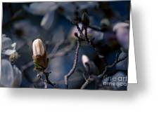 Blue Magnolia Greeting Card