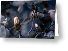 Blue Magnolia Greeting Card