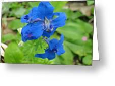 Blue Majestu Greeting Card