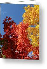 Blue Maple Greeting Card