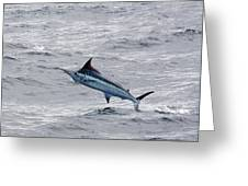 Blue Marlin At Oregon Inlet North Carolina Greeting Card