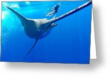 Blue Marlin Magic Greeting Card