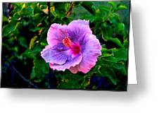 Blue Moon Hibiscus Greeting Card