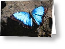 Blue Morpho #2 Greeting Card