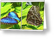 Blue Morpho Butterfly Diptych Greeting Card