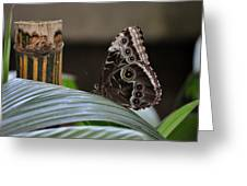 Blue Morpho Butterfly Eyespots Greeting Card