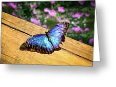 Blue Morpho Butterfly On A Wooden Board Greeting Card