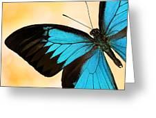Blue Morpho Closeup Greeting Card