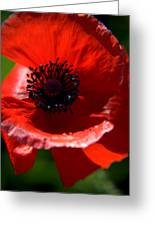 Blue On Red Poppy Greeting Card