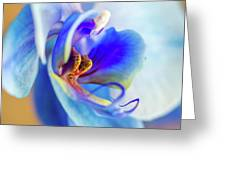 Blue Orchid Greeting Card
