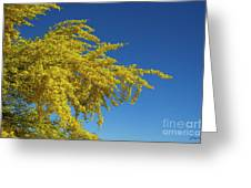 Blue Palo Verde Tree-signed-#2343 Greeting Card