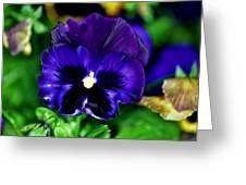 Blue Pansy Flower Greeting Card