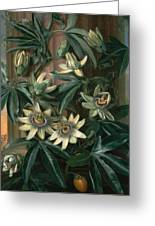 Blue Passion Flower For The  Temple Of Flora By Robert Thornton Greeting Card