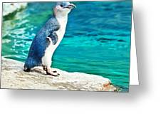 Blue Penguin Greeting Card