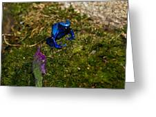 Blue Poison Arrow Frog Greeting Card