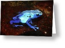 Blue Poison Dart Frog - Dendrobates Azureus Greeting Card