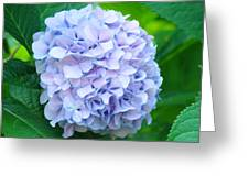Blue Purple Hydrandea Floral Art Botanical Prints Canvas Greeting Card