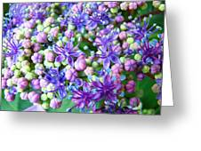 Blue Purple Hydrangea Flower Macro Art Greeting Card