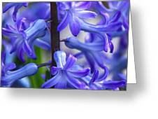 Blue Rhapsody Greeting Card