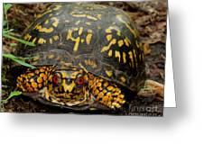 Blue Ridge Box Turtle Greeting Card