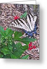 Blue Ridge Butterfly Greeting Card