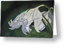 Blue Ridge Lilly Greeting Card