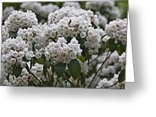 Blue Ridge Mountain Laurel Greeting Card