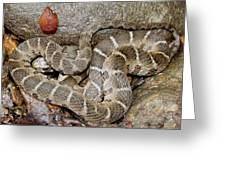 Montreat Water Snake Greeting Card
