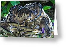 Blue Rimmed Fungus Greeting Card