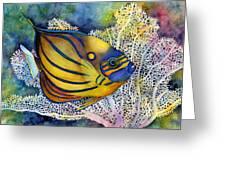 Blue Ring Angelfish Greeting Card