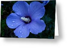 Blue Rose Of Sharon II Greeting Card
