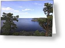 Blue Sea And Pine Trees Greeting Card