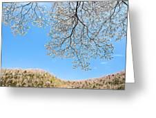 Blue Skies And Dogwood Greeting Card