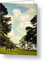 Blue Skies And Pines Greeting Card