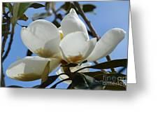 Blue Skies Magnolia Greeting Card