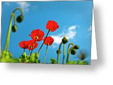 Blue Sky And Poppies Greeting Card