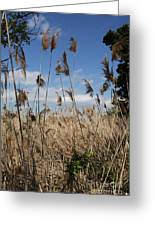 Blue Sky And Seaoats Greeting Card