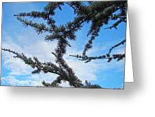 Blue Sky Art Prints White Clouds Conifer Pine Branches Baslee Troutman Greeting Card