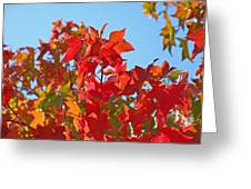 Blue Sky Autumn Art Prints Colorful Fall Tree Leaves Baslee Greeting Card