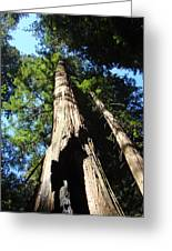 Blue Sky Big Redwood Trees Forest Art Prints Baslee Troutman Greeting Card