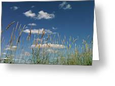 Blue Sky Drive-in Greeting Card