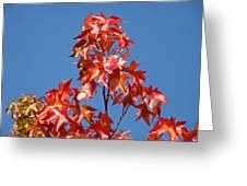 Blue Sky Fall Tree Leaves Landscape Art Prints Baslee Troutman Greeting Card