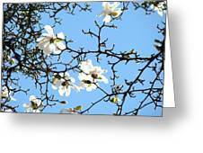 Blue Sky Floral Art White Magnolia Tree Greeting Card